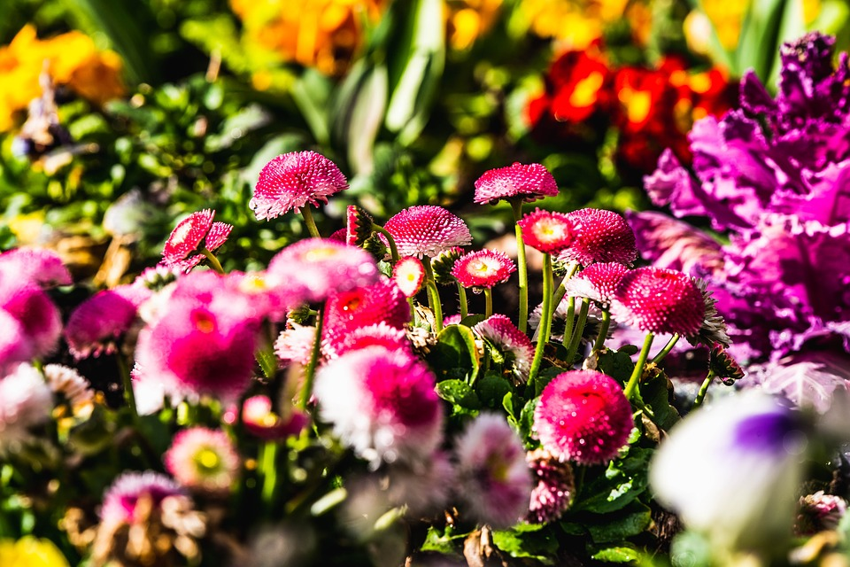Оптовая и розничная покупка рассады цветов