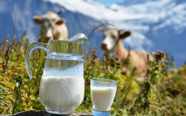 Доставка Вологодской мясо-молочной продукции оптом